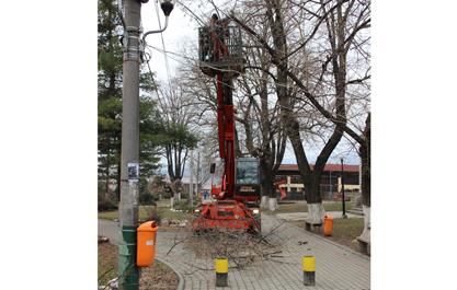 Primaria a inceput toaletarea copacilor