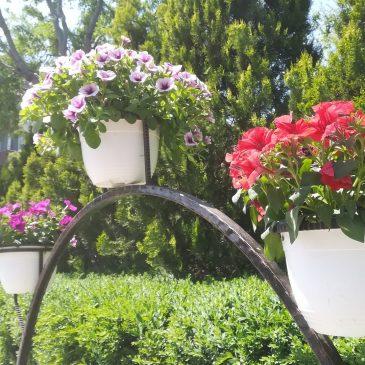 Flori în Centrul Civic